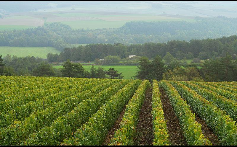vignes domaine roland van hecke producteur de crémant de bourgogne a grancey sur ource